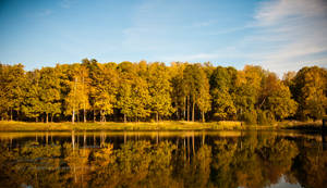 Autumn trees near water by marphey