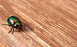 Colorfull bug