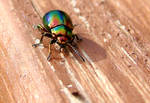 Colorfull bug, stage 2