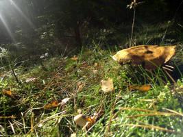 Mushroom 1 by KSnake