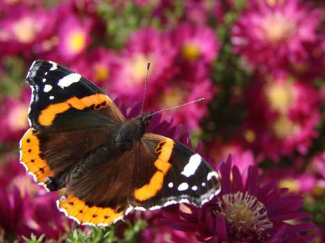 Motyle i pszczoy 2013-10-15 068