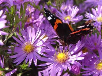 Motyle i pszczoy 2013-10-15 019