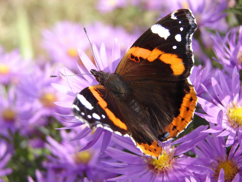 Motyle i pszczoy 2013-10-15 012 by KSnake