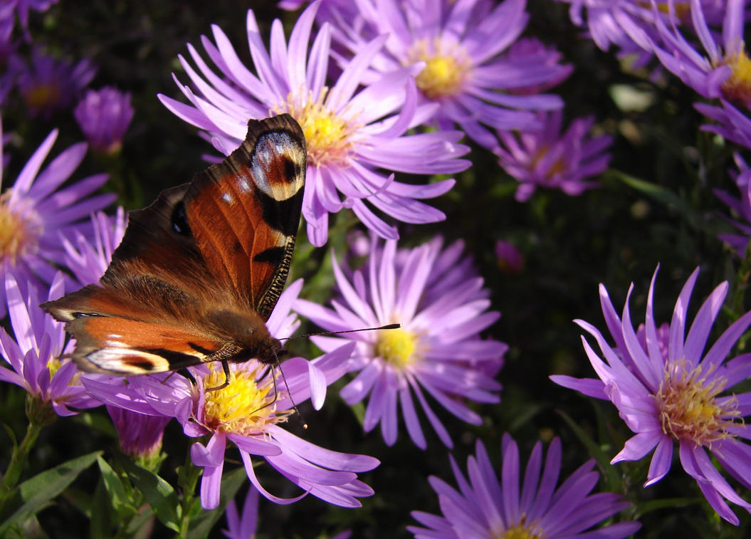 Motyle i pszczoy 2013-10-15 002 by KSnake