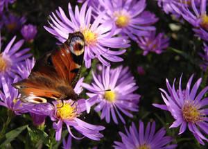 Motyle i pszczoy 2013-10-15 002