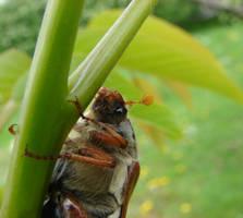 May Bug 2