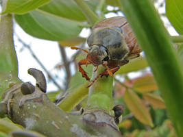 May Bug 3