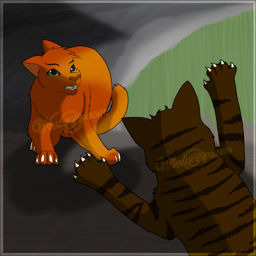 Fireheart Vs. Tigerclaw By Winterstream On DeviantArt