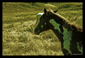 equine by kilroyhasbeenhere