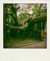 tree - puerto vallarta by kilroyhasbeenhere