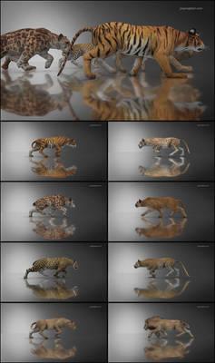 DAZ Big Cat 2 Walk Cycle Animation
