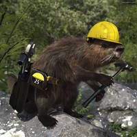 Busy Beaver by JoePingleton