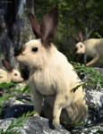Rabbitat