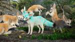 Fennec Fox Party