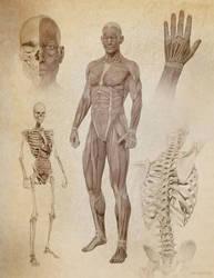 Sketchy Anatomy by JoePingleton