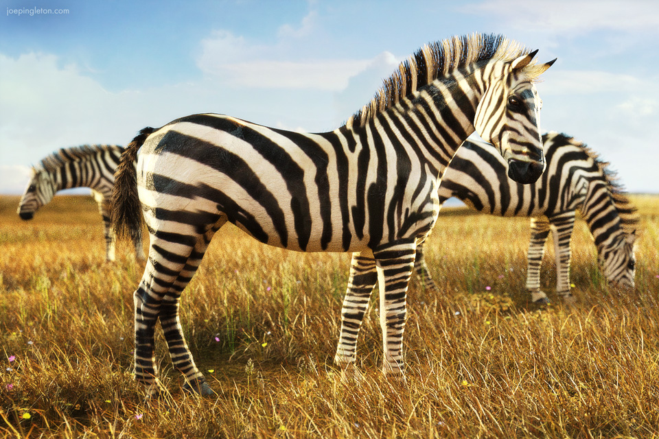 Showing Your Stripes by JoePingleton