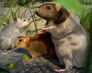 Hamster Style by JoePingleton
