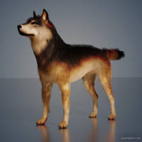 Blender German Shepherd Hair Test 01 by JoePingleton