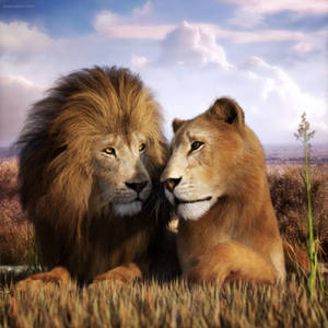 Lie Down with Lions Again