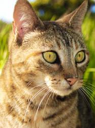 feline gaze by CamelowWw