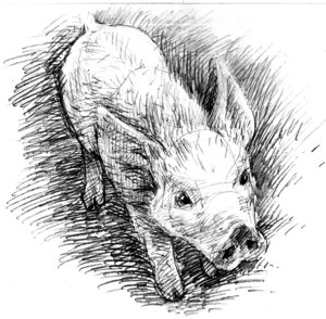Pencil_pig_3 - by Anika-Gris by alltheanimals