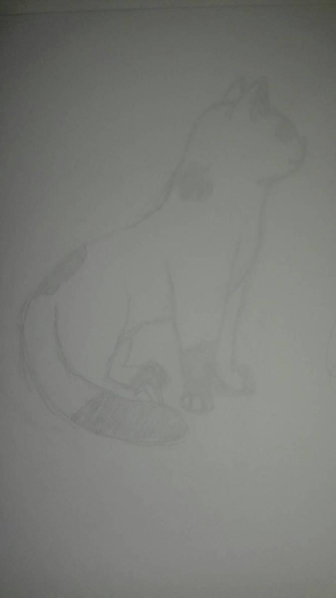 Tryna draw a cat TwT by simoloita