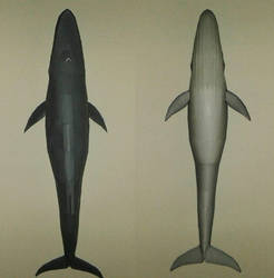 Blue whale from above and below papercraft