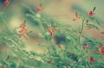 so Orange by NDoOY