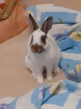 Bunny Ellie ^^
