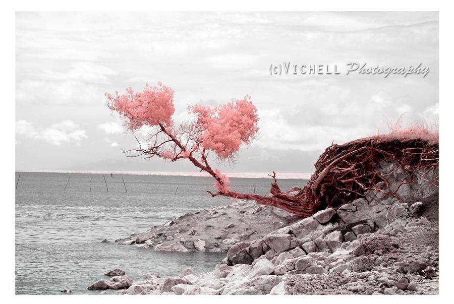 Stay Beautiful II by butterflies2Heaven