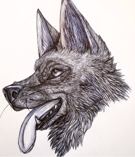 German shepherd sketch by Broadwinger
