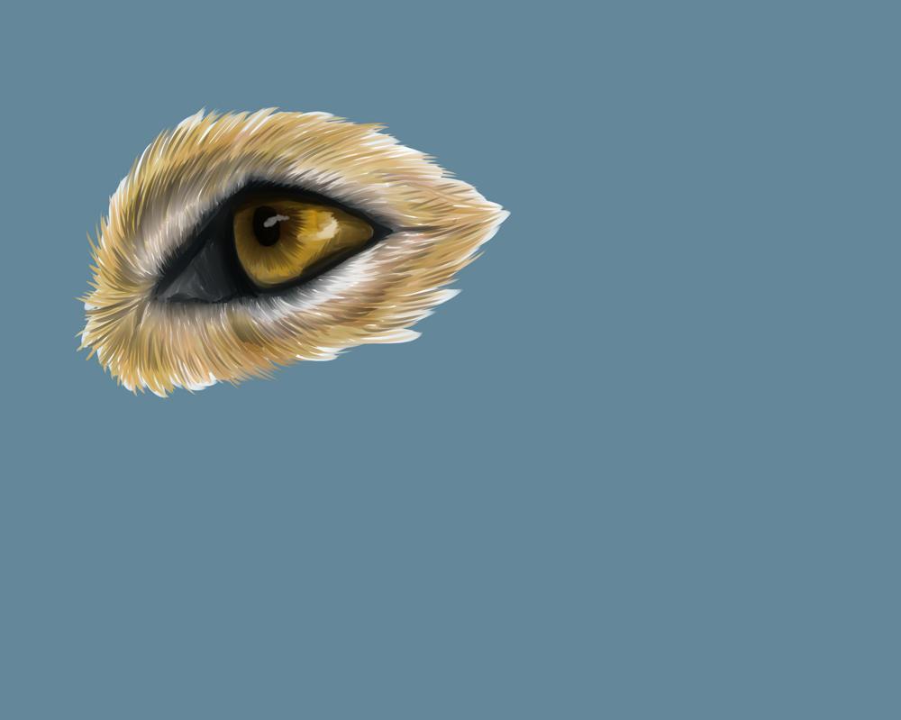 Coyote eye practice by Broadwinger