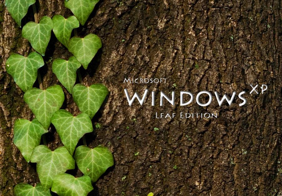 wallpapers windows xp. wallpaper windows xp.