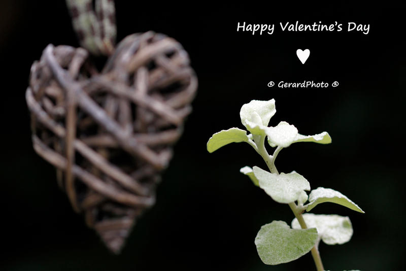 Happy Valentine's Day by GerardPhoto