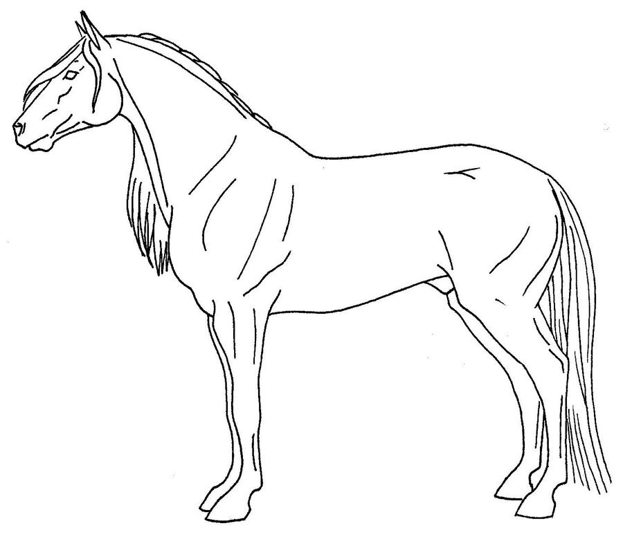 Quarter horse drawing - photo#8