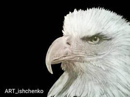 embedded_item1615488023610 by ARTishchenko
