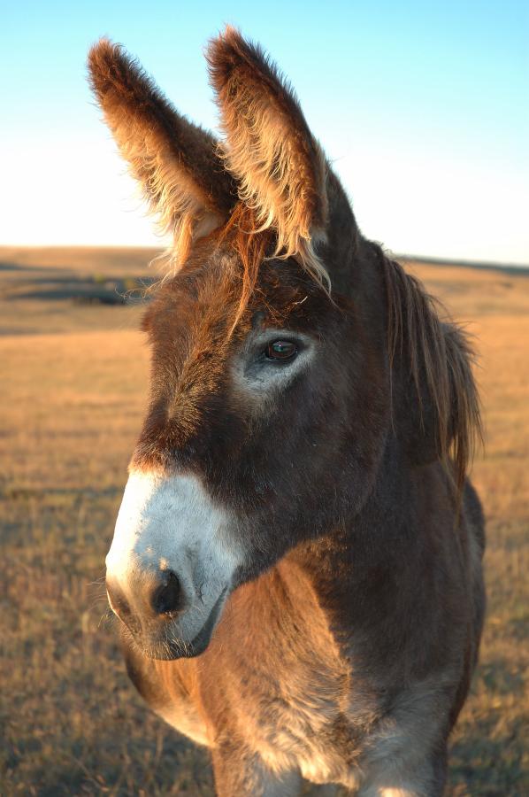 Donkey_____by_Kelabel.jpg