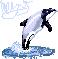 Maui Dolphin by e-pona