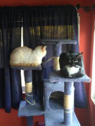 Loaf cats by Ahiru-Dezu