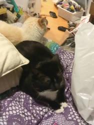 Bed clutter by Ahiru-Dezu
