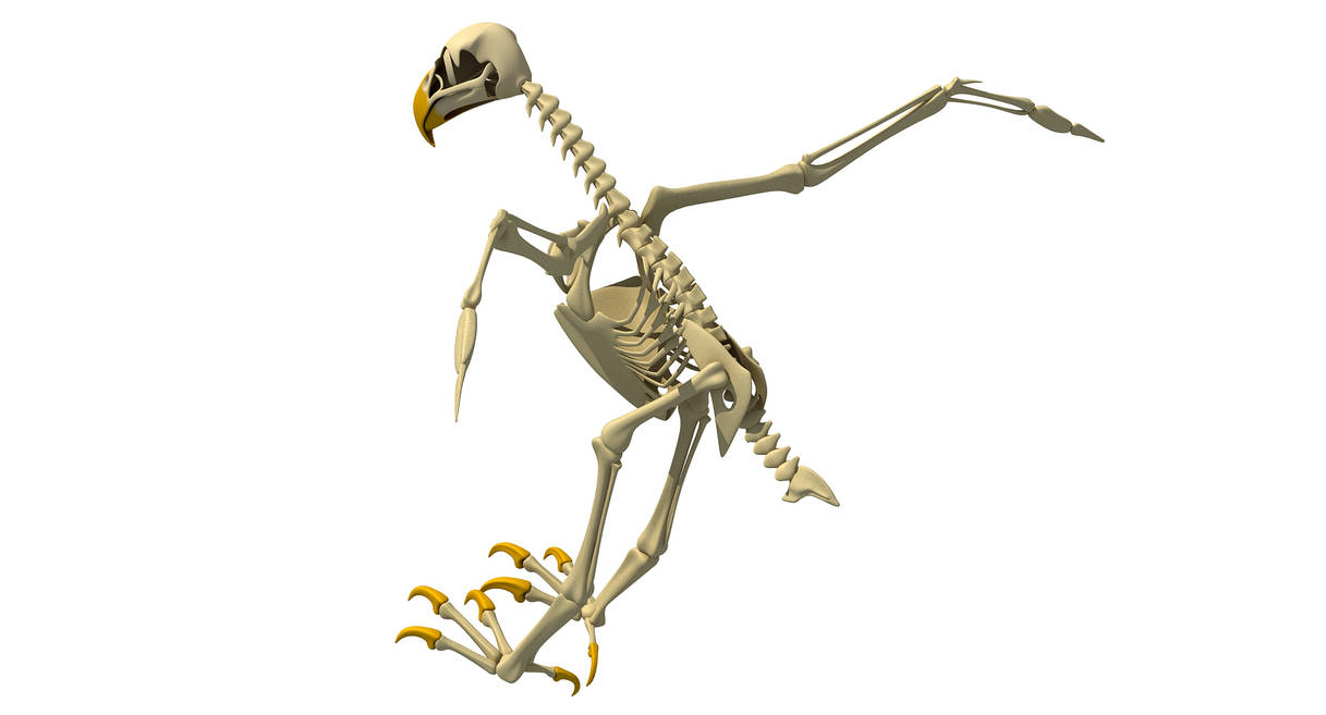 Bald Eagle Skeleton 3D Model by 3D-Horse on DeviantArt