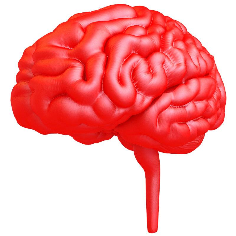 3D Printable Human Brain Model - 3D Models by 3D-Horse on DeviantArt