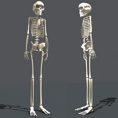 Human Skeleton - 3D Models by 3D-Horse on DeviantArt