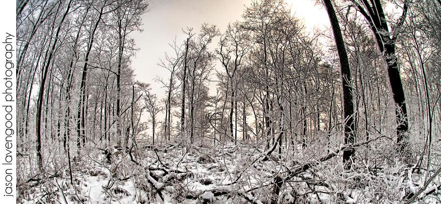 winter wonderland by greycamera