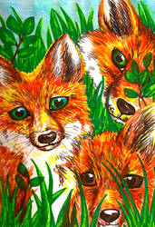 Foxes by Puppy2388