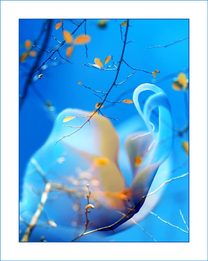 Blue orchid by valeriemonthuit