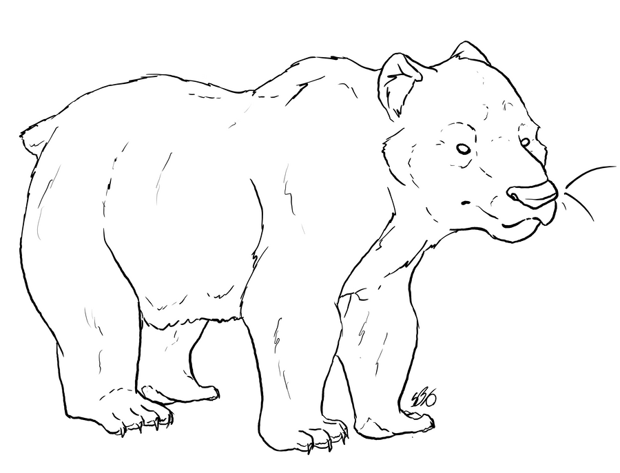 Bear Template Bear template by sanr4