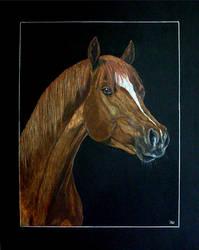 Arabian Horse by Vulkanette
