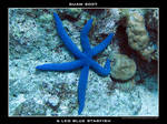 Guam 13 - 6 Leg Blue Starfish