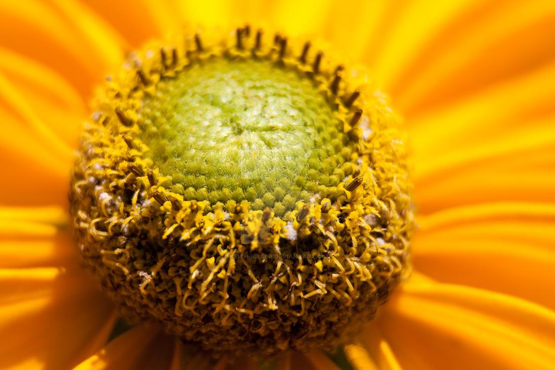 Yellow flower macro by Keith-Killer